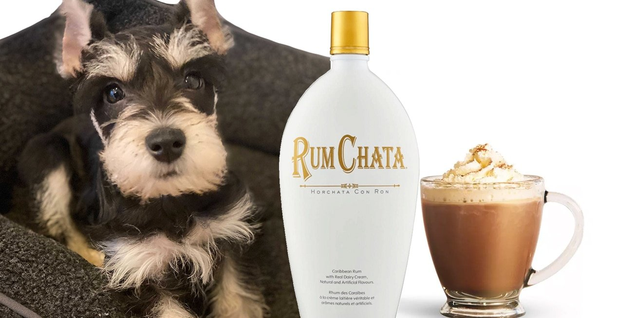 Featured Recipe: Roxy's Rumchata Iced Coffee